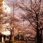 2018年も桜満開(*゚▽゚*)